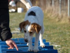 Hundezentrum Wien Hundeschule
