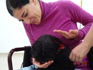 Therapiehundetraining - Project Canis